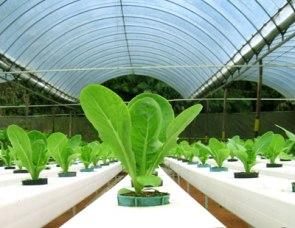 Hydroponic-Gardening-105